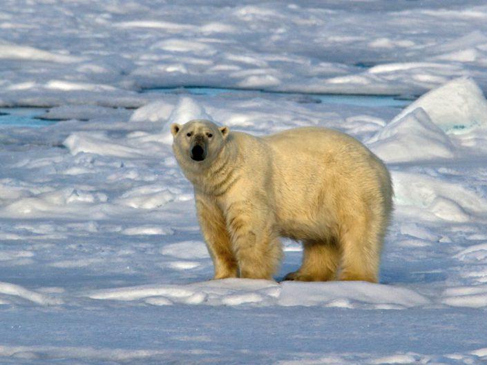 Svalbard Islands